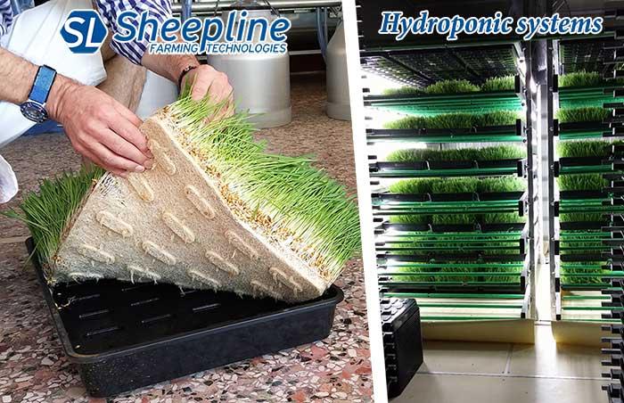 Hydroponic Systems - Sheepline Farming Technologies